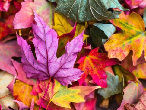 la réserve naturelle de Limay vous propose une balade d'automne le 17 octobre 2021
