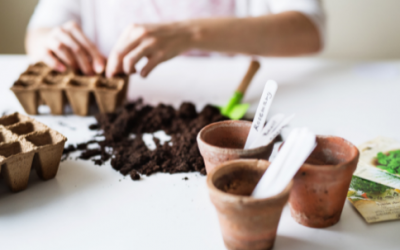 Gasny : Troc plantes et graines
